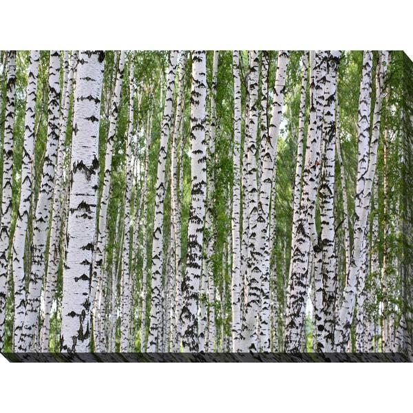 """Birching Around 1"" Giclee Print Canvas Wall Art"