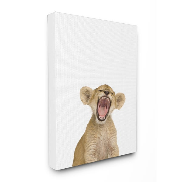 Baby Lion Cub' Studio Photo Stretched Canvas Wall Art 23734128