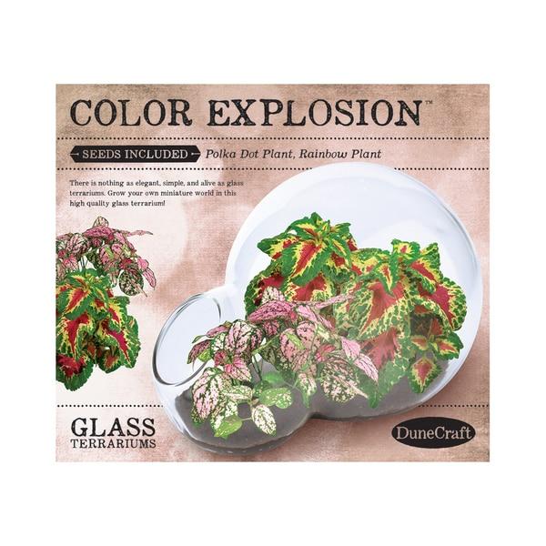 Double Bubble Glass Terrarium - Color Explosion 25897057