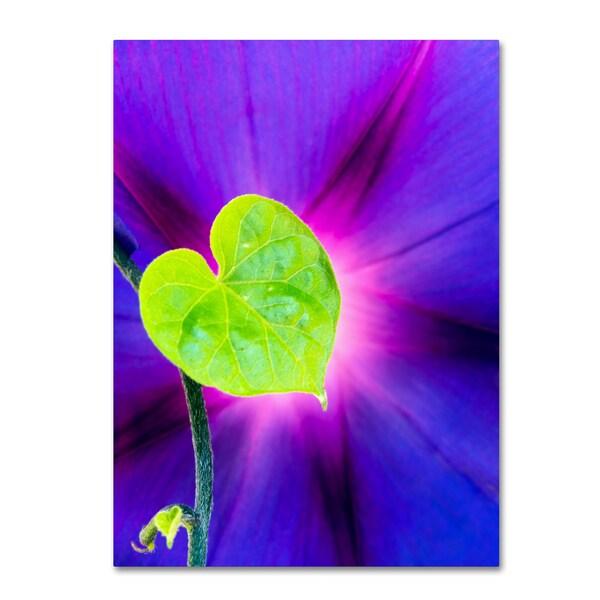 Kurt Shaffer 'Heart of a Morning Glory' Canvas Art 25952347