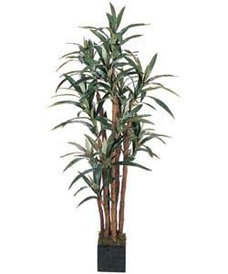 5-foot Yucca Silk Tree