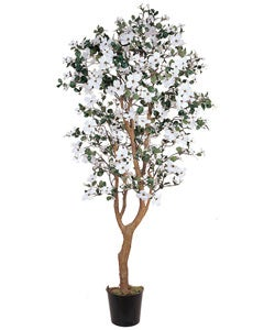 5-foot Dogwood Silk Tree