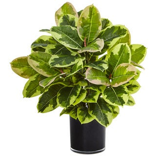 Nearly Natural Real Touch Rubber Plant in Glossy Cylinder