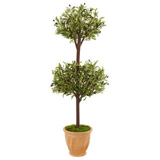 4.5-foot Olive Topiary Tree in Terracotta Pot