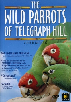 The Wild Parrots of Telegraph Hill (DVD)