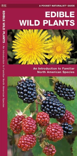 Edible Wild Plants: A Folding Pocket Guide to Familiar North American Species (Paperback)