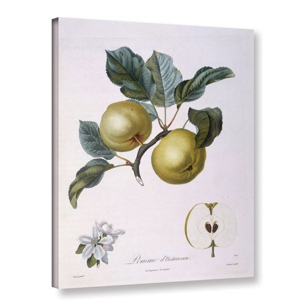 Pierre Jean Francois Pturpin's Apple, Pomme D'Astracan, Gallery Wrapped Canvas 29128716