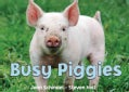 Busy Piggies (Board book)