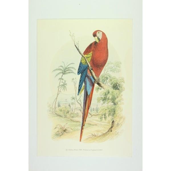 Scarlet Mccaw premium Art Print of Birds 29654503