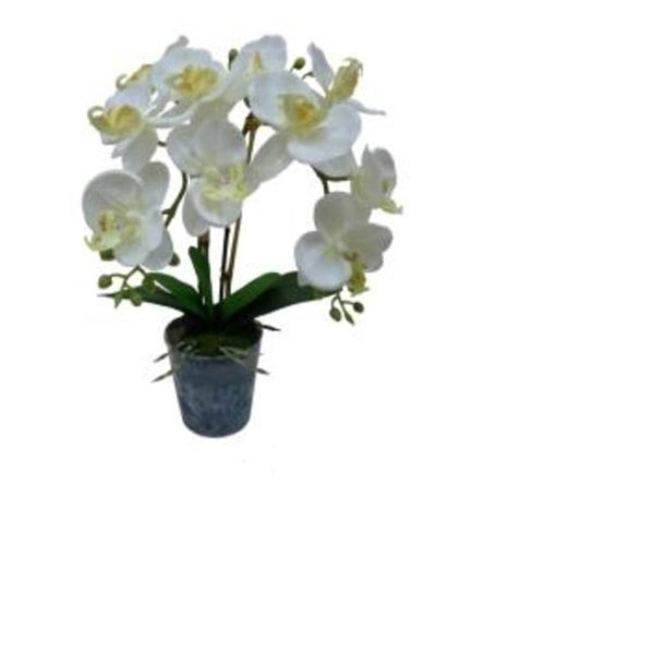 White and Sunny Artificial Blooming Phaleanopsis Orchid Plant 29870675