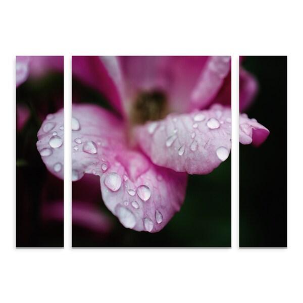 Trademark Fine Art PIPA Fine Art 'Raindrops on Wild Rose Color' Small Multi-panel Art Set 29870886