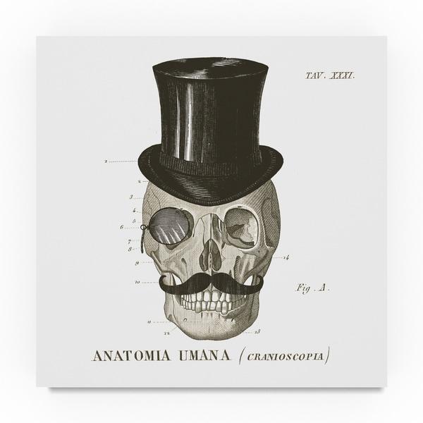 Sue Schlabach 'Dandy Bones I' Canvas Art 31388299