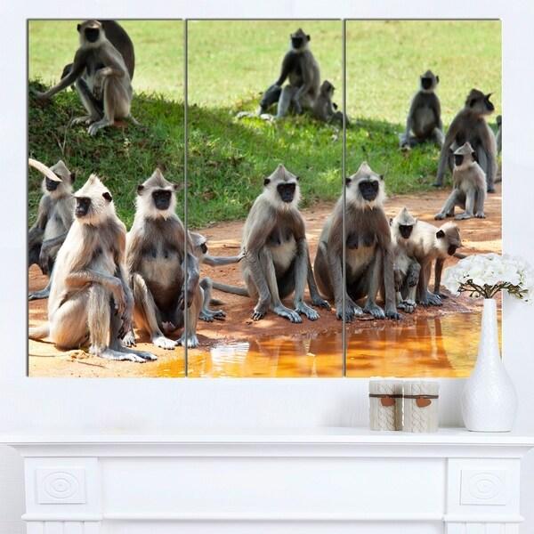 Designart 'Monkeys in Sri Lanka' African Canvas Artwork 31452446