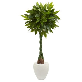 5' Money Artificial Tree in White Oval Planter (Real Touch)