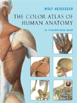 The Color Atlas of Human Anatomy (Paperback)