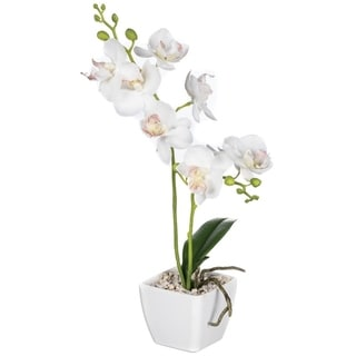 Mini Orchid Potted Plant