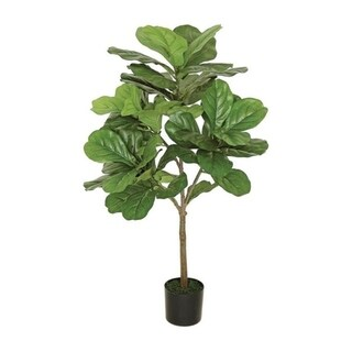 3' Fat Leaf Fig Tree - Green