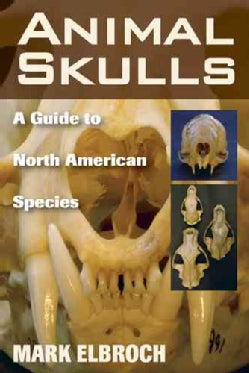 Animal Skulls: A Guide to North American Species (Paperback)