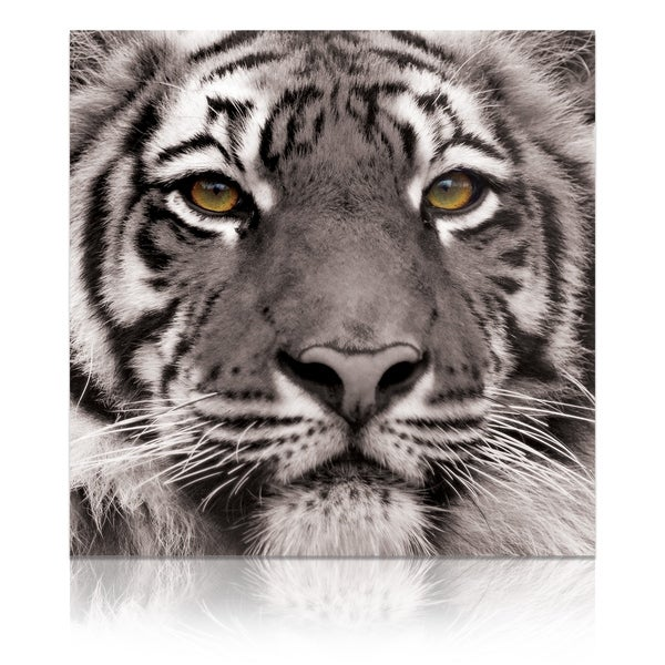 "Empire Art ""Eye of the Tiger"" Frameless Free Floating Tempered Art Glass by EAD Art Coop 33988679"
