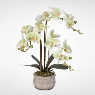 Real Touch Green Phaelaenopsis Orchids in Concrete Pot
