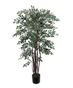 Silk Ruscus Tree (4 ft.)