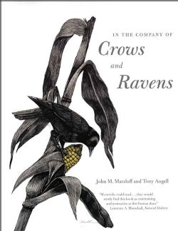 In the Company of Crows And Ravens (Paperback)