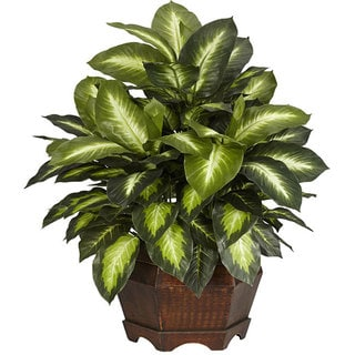 Golden Dieffenbachia Silk Plant - Green