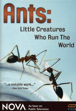 Ants - Little Creatures Who Run the World (DVD)
