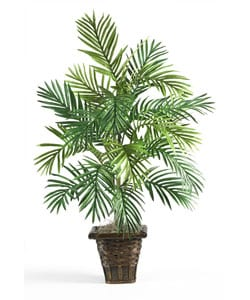 Areca Palm with Wicker Basket
