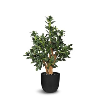 Jade Plant Artificial Faux Botanical - Green - 27.6 Inch