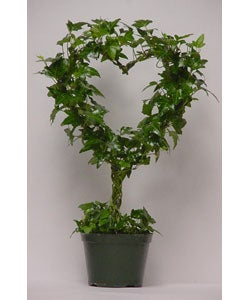 Ivy Heart Topiary in Plastic Pot