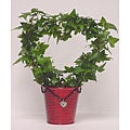 Ivy Heart Topiary in Decorative Tin Pot