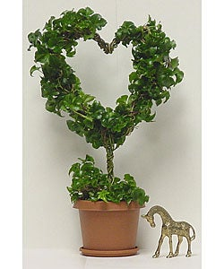 Ivy Heart Topiary with Stem in Plastic Terracotta Pot