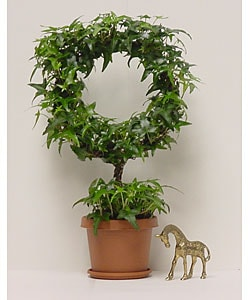Ivy Lollipop Topiary with Stem in Plastic Terracotta Pot