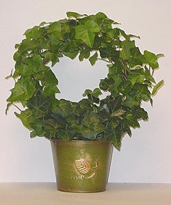 Live English Ivy Topiary Plant Wreath in Green 'Birch' Metal Tin