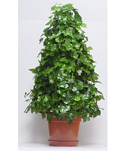 Ivy 4-wire Tree in Plastic Terracotta Pot