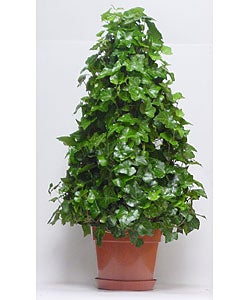 Ivy 4-wire Tree Topiary in Plastic Pot