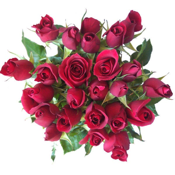 Simply Two Dozen Red Roses
