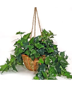 Forever Silk English Ivy Hanging Basket (case of 2)