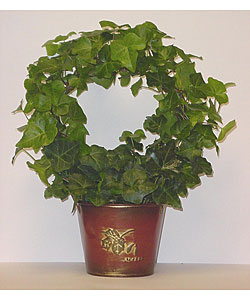 Ivy Wreath in Maple Tin