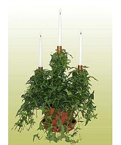 Triple Ivy Candelabra Topiary in Plastic Pot