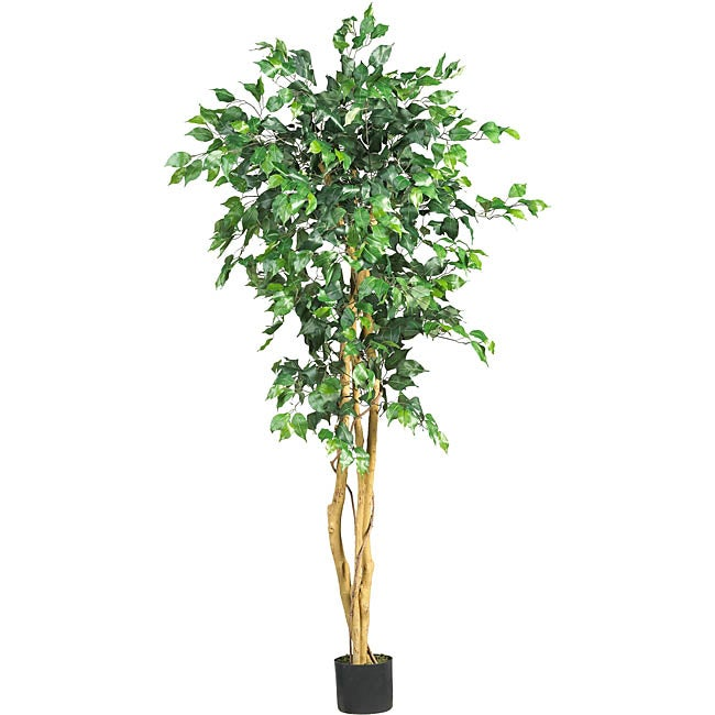 Silk Ficus 5-foot Tree