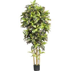 Silk Croton 6-foot Tree