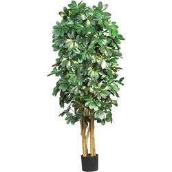 Silk Schefflera 5-foot Tree