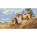 Gold Collection African Lions Counted Cross Stitch Kit