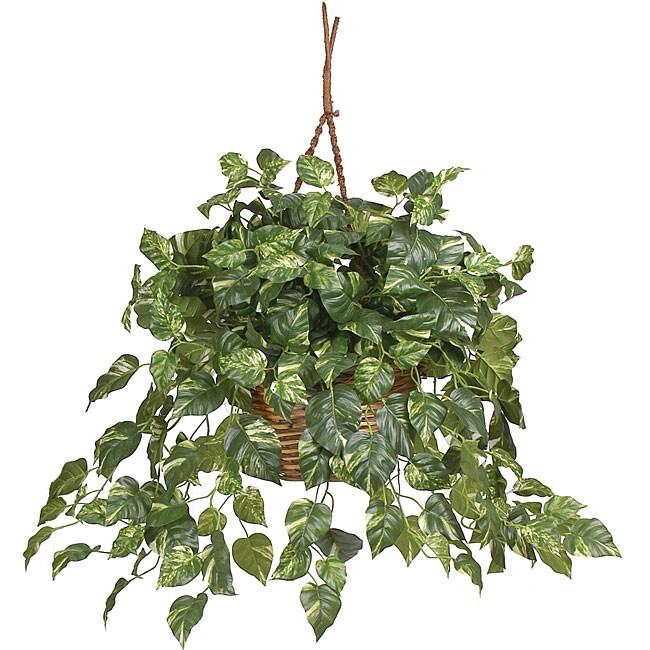 Pothos Silk Plant in Hanging Basket