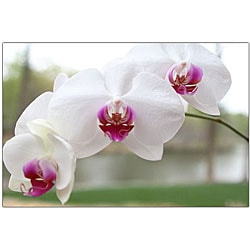 Cary Hahn 'White Orchid' Canvas Art