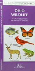 Ohio Wildlife: An Introduction to Familiar Species of Birds, Mammals, Reptiles, Amphibians, Fish and Butterflies (Pamphlet)