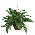 Boston Fern Silk Plant Hanging Basket