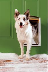 PetSafe Extreme Medium White Weather Door